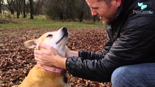 How To Communicate With Your Dog And Really Understand Each Other