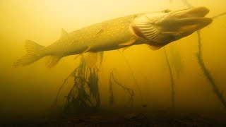 ОНА НАШЛА СВОЮ ЖЕРТВУ Рыбалка на жерлицы и атака щуки на живца Зимняя рыбалка 2019 2020