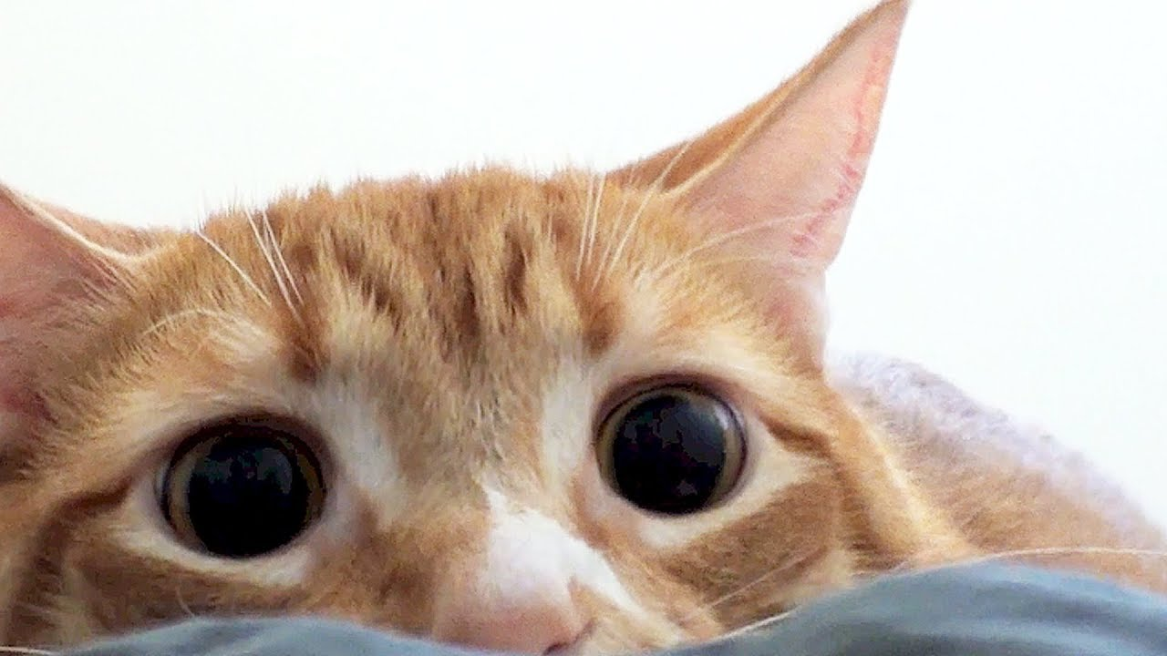 Crazy Cat Eyes Youtube