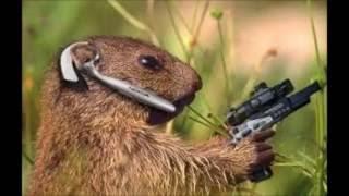 Śmieszne zwierzęta i memy!!