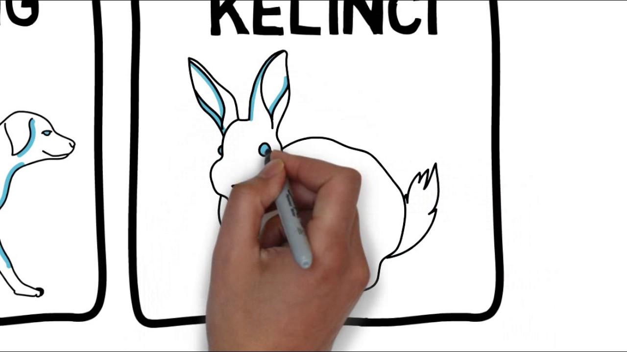 Tutorial Menggambar Sketsa Hewan Sederhana Dengan Mudah
