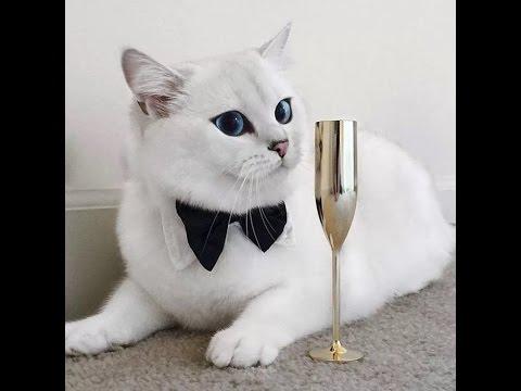 самые красивые кошечки в мире