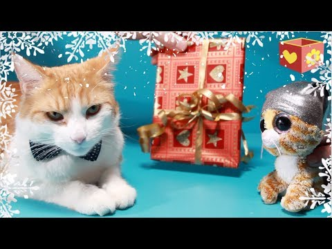 Cute cat part 5 | Pet Christmas presents | Bellboxes Simba aww |  Funny friendly animals