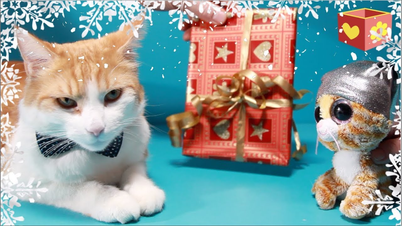 Cute Cat Part Five  Pet Christmas Presents Bellbosimba Aww Funny Friendly Animals