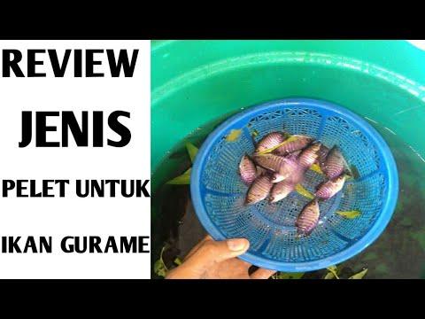 Jenis Pelet Ikan Gurame Agar Cepat Besar Youtube