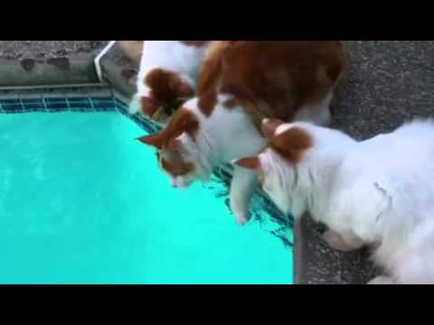 Cats playing in water!