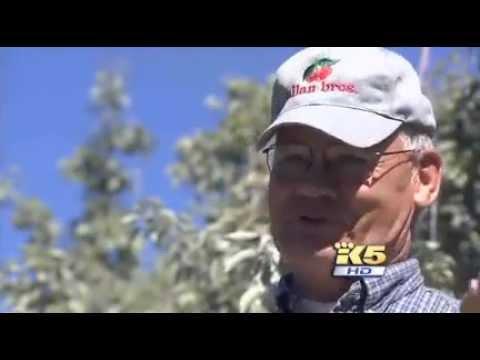 Bee Keeper in Yakima, SAVES the WORLD !