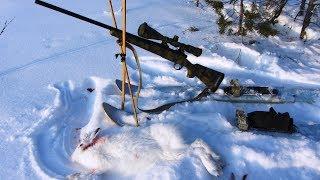 Охота на зайца.223 rem.