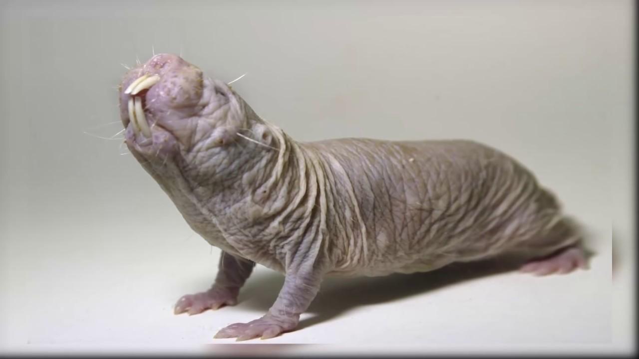 11 Animals Which Exist But Are Hard to Believe - በአለማችን የሚገኙ ነገርግን ይኖራሉ ብለን ለማመን የሚያስቸግሩ 11 አይነት ዝርያ