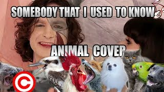 Gotye feat. Kimbra - Somebody That I Used To Know (Animal Cover) [REUPLOAD]