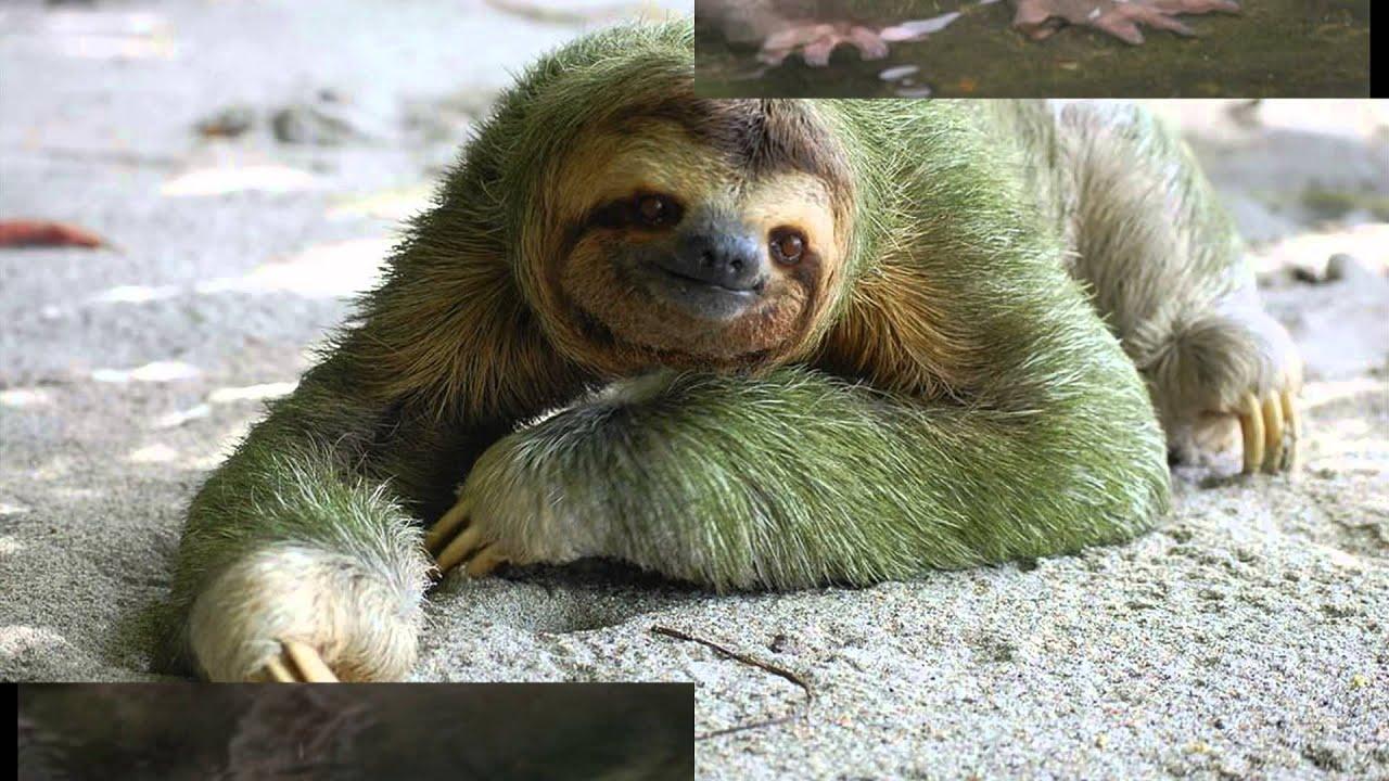 картинки смешных животных, видео приколы с животными ...