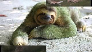 картинки смешных животных, видео приколы с животными.