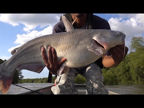 Mississippi River Rough Summer Spawn Catfishing
