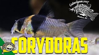 How to Breed Corydoras! by Eric Bodrock at Cataclysm 2017 thumbnail