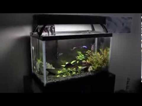 Nualgi Aquarium Trial: Week 3
