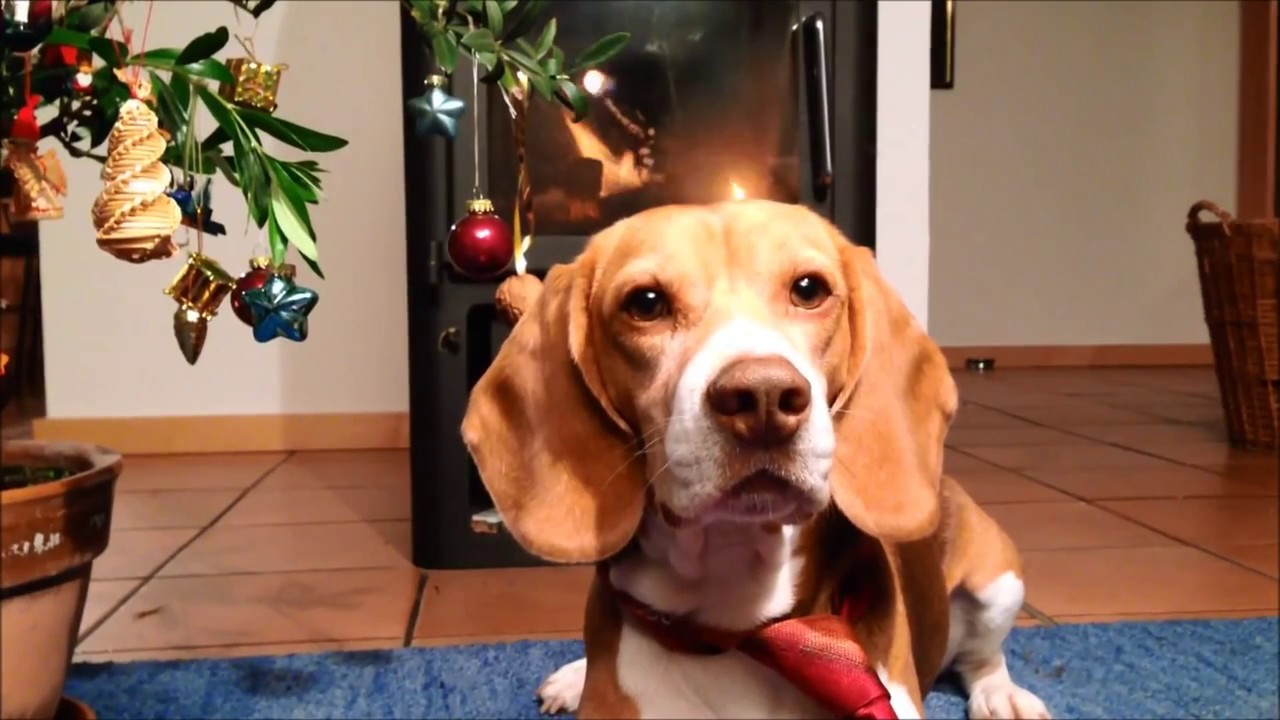 Beagle Barnie Gedicht Zum 4 Advent