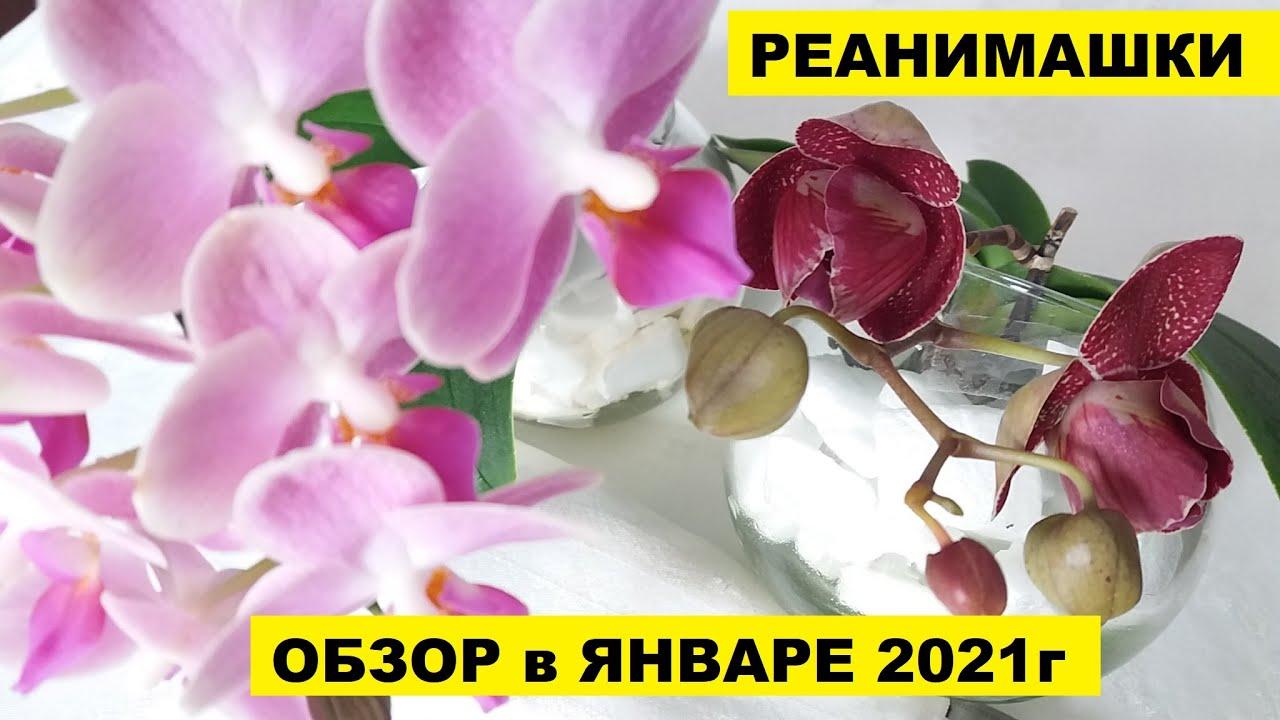 МОИ РЕАНИМАШКИ в ЯНВАРЕ 2021г
