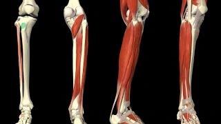 видео Растяжение связок ноги: бедро, икра, стопа