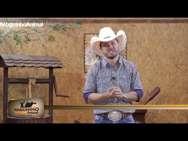Waguinho Animal 23/02/19 na íntegra