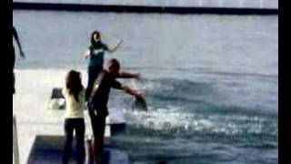 false killer whale dance