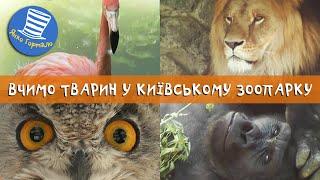 Вчимо тварин у Київському зоопарку. Розваги і відпочинок з дітьми
