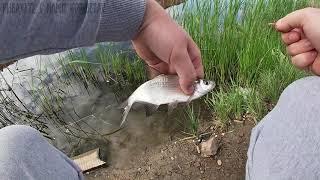 ПОДЛЕЩИК НА ФИДЕР ВИДЕО ИЗ МАЙСКОГО АРХИВА Рыбалка 2020 Казахстан Кокшетау оз Копа