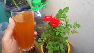 Um copo desse líquido na sua ROSA (90 CENTAVOS)