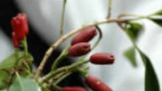 MUNGAKESHA KISIMANI - SWAHILI TARAAB SONG