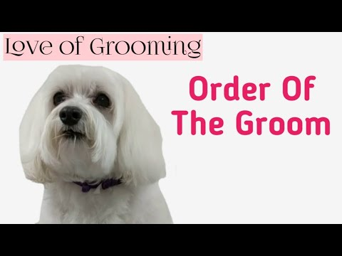 step-by-step-dog-grooming---order-of-the-groom-on-a-well-maintained-dog