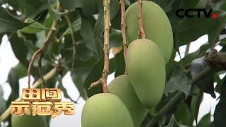 《田间示范秀》 20200421 保瓜保果有高招 CCTV农业