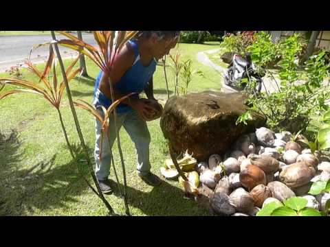 Cook Islands - How To Open A Coconut