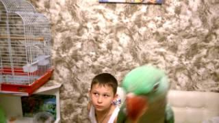 Александрийский попугай Гринни: шкодник 1 часть октябрь 2015г