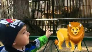 Зоопарк для детей Животные зоопарка для детей Хищные животные Видео для детей  Zoo for kids
