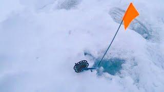 ОРАНЖЕВЫЙ ФЛАГ -  ЛЕСКА В НАТЯГ !!! Щука на жерлицы. Зимняя рыбалка на пруду.