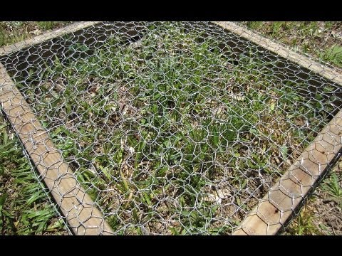How To Grow Grass In A Chicken Pen Youtube