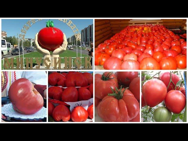 Новое поступление семян минусинских томатов
