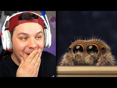 Lucas The Spider *ADORABLE* - Reaction