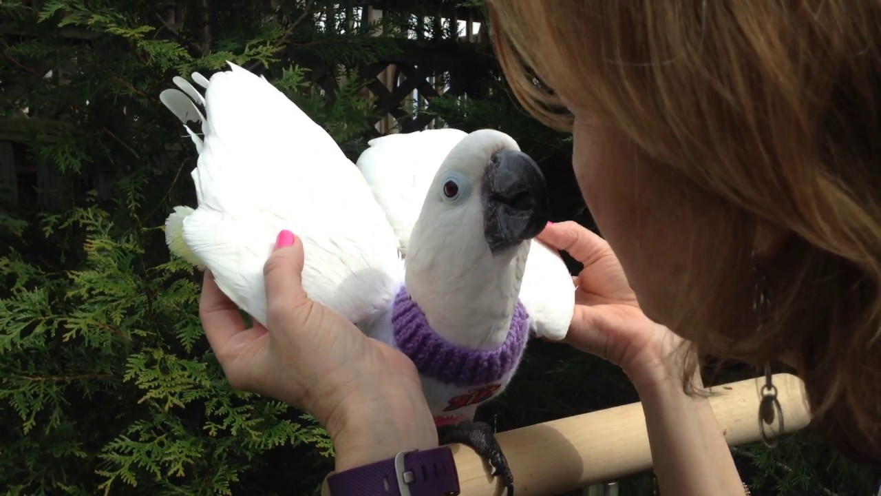 How To Put On An Avian Fashions Feathersweater Youtube