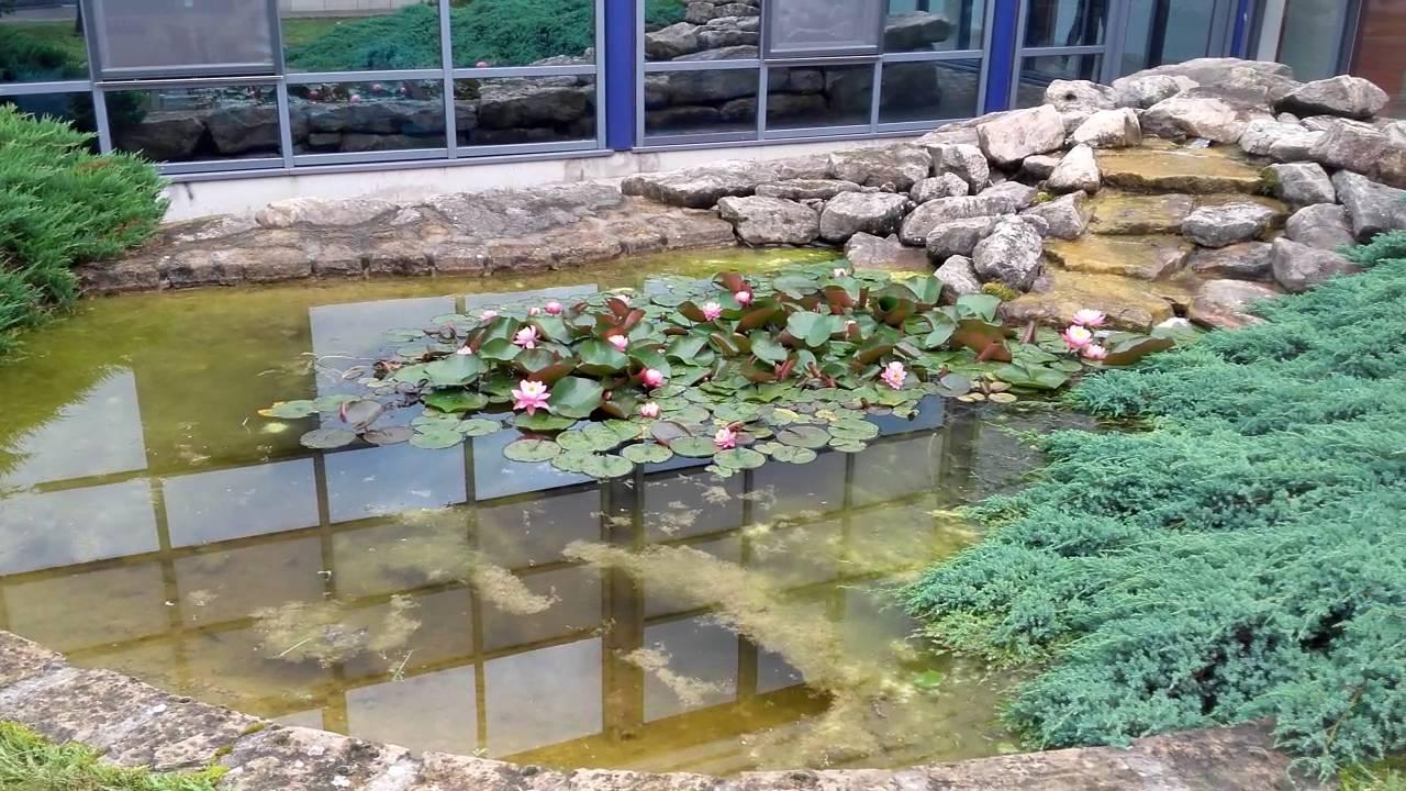 Bassin avec cascade modele de bassin exterieur pour poisson bassin poisson exterieur fontaine - Bassin a poisson avec cascade ...