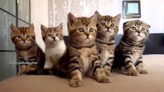 Cute pussy cats