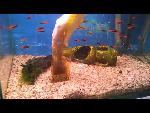 Aquarium tropical montrouge cloche vase youtube for Entretien aquarium