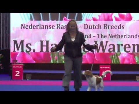 Best Dutch Breeds - Amsterdam Winner Show 2015