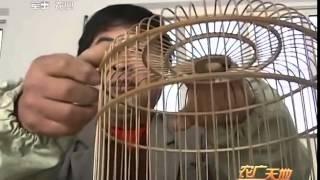 Video Cách làm lồng chim ( trung quốc) download MP3, 3GP, MP4, WEBM, AVI, FLV Oktober 2018