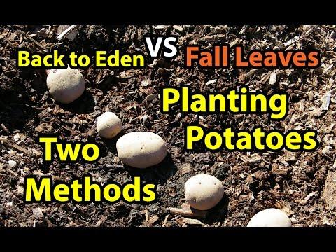 Back To Eden Gardening In Colorado Doovi