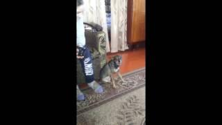Ранчо певец/Поющие собаки/singing dog