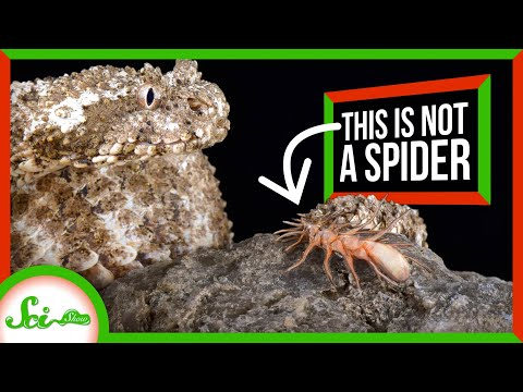 That's Not A Spider: It's a SNAKE!