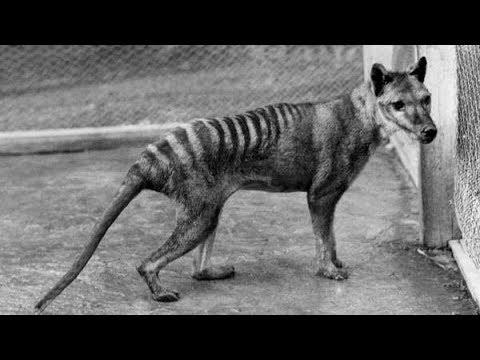 10 Rari Video Di Animali Estinti
