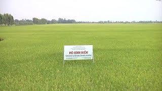 Tin Tức 24h : Long An phát triển vùng lúa chất lượng cao