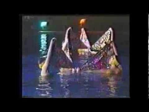 Плавание с дельфинами в Московском дельфинарии