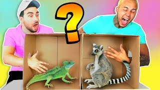 WHATS IN THE BOX CHALLENGE !? (ANIMALS FUNNY REACTION)